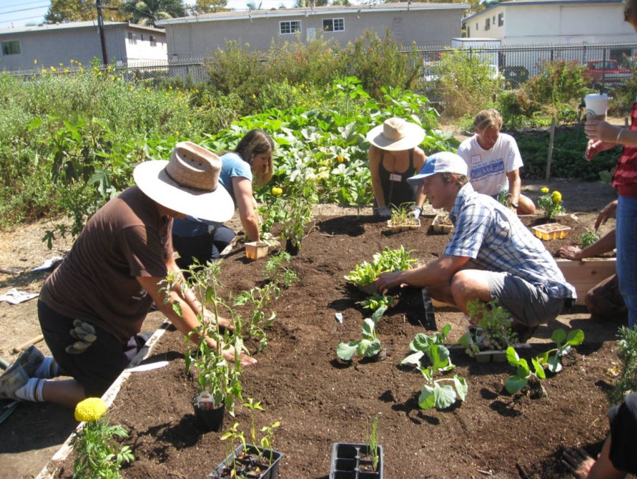 Orange County gardening for food