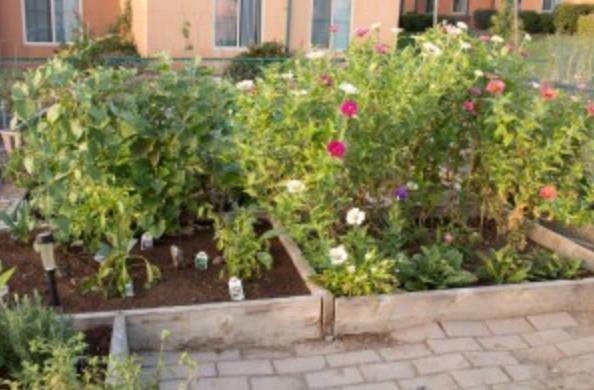 small garden in irvine